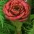 Thumb-1422063290