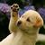 Thumb-1380744544
