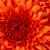 Thumb-1431136605