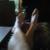 Thumb-1470354801